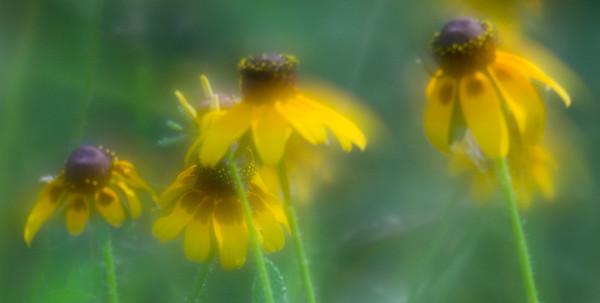 Flowering Worlds