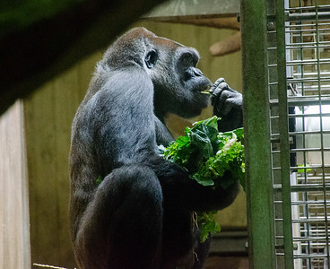 Small Mammals and Great Apes 2016