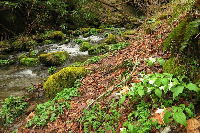 Porter's Creek Trail (4.5 miles; d=6.20)