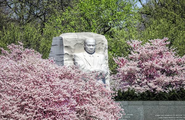Washington D.C. Cherry Blossom Festival 2019