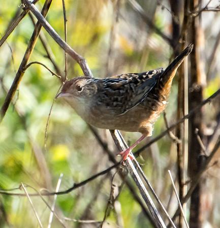 U.S. Bird Life List 2017