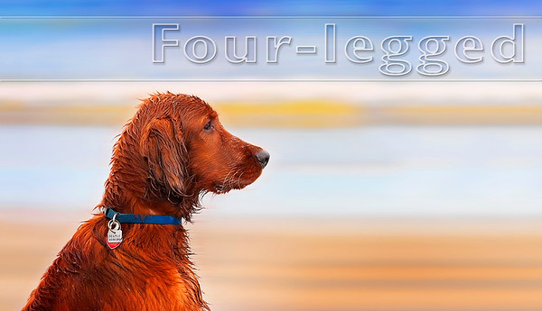 Four-legged