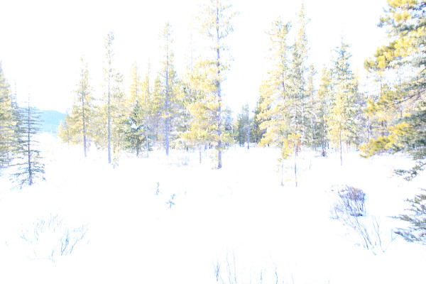 Abstractions of Winter Forest