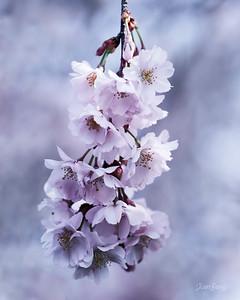 2018-4-22-花卉外拍