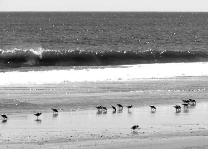 Outer Banks Corolla (231).jpg