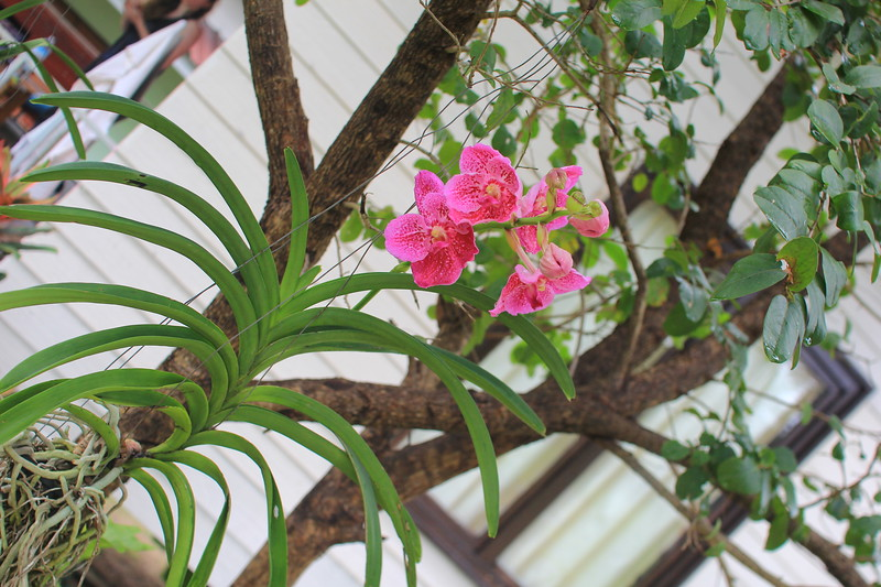"""orchid blossoming in a front of """"MoonLover Bungalow"""" at """"Khao Tam Sanctuary"""""""