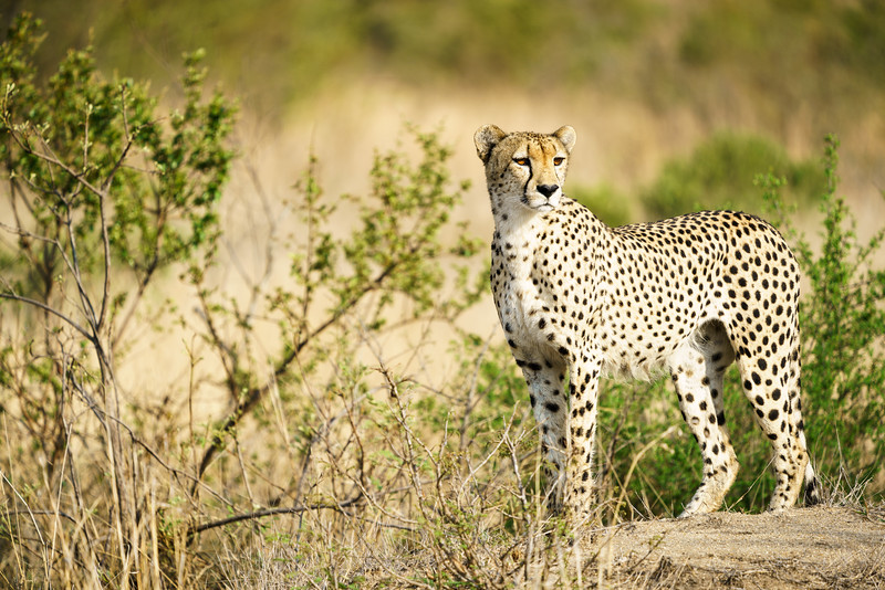 LeopardHills-20171022-0276.jpg