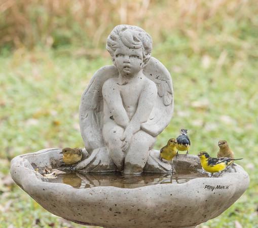 Lesser Goldfinches x 5_DWL3714.jpg