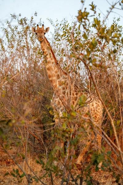 Botswana_0818_PSokol-4512-Edit.jpg