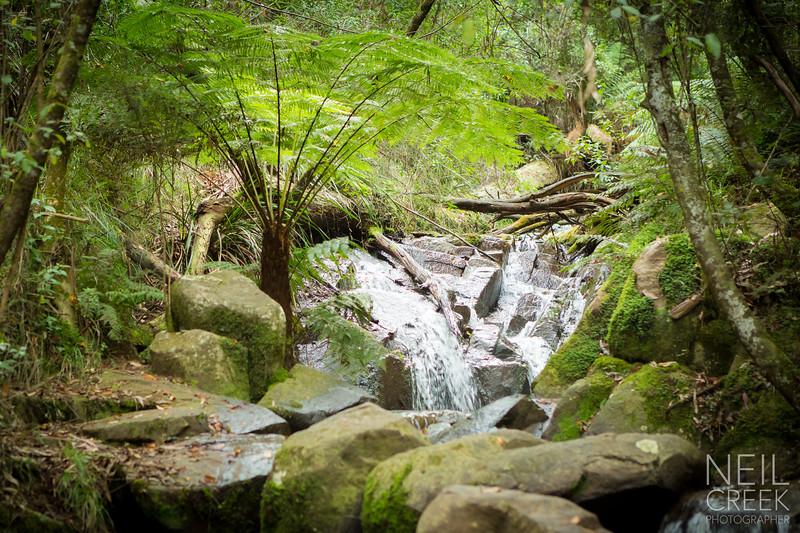 creek-120416-002.jpg