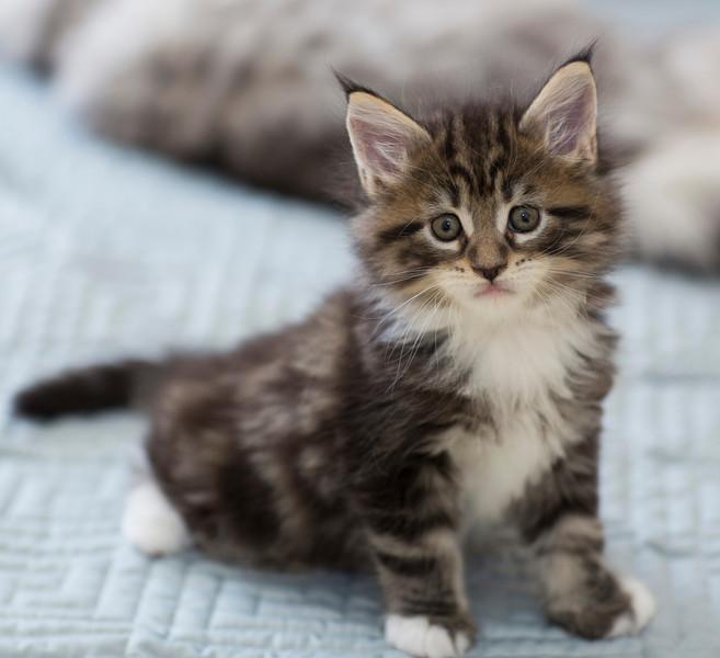Kittens246.jpg