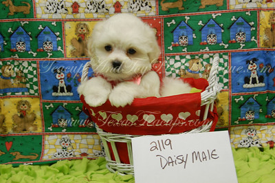 2010 Daisy  adopted for $675 or less