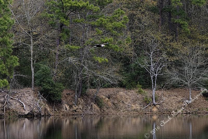 Lake2016-54.jpg