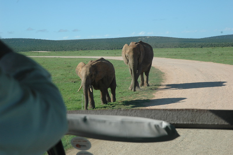 Addo Elephant National Park - Leslie Rowley