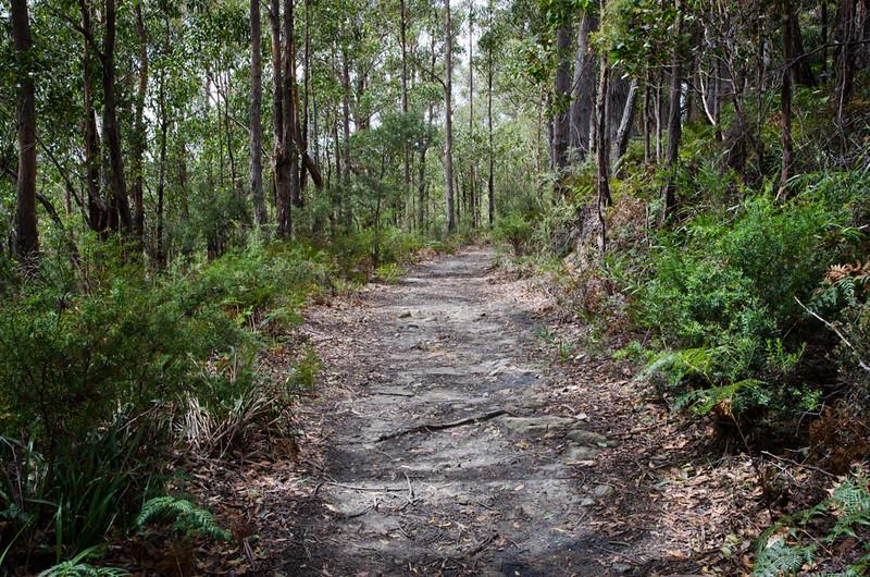 Pelverata Falls Trail