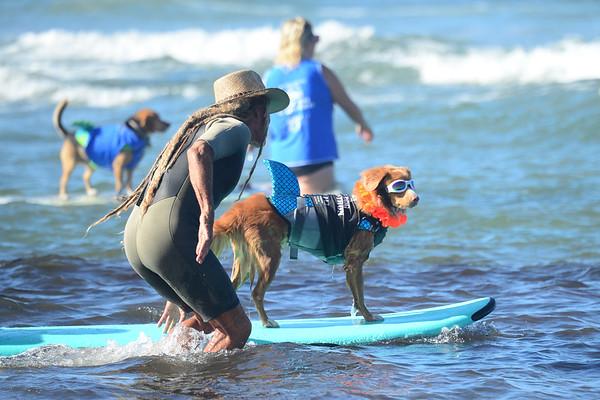 Surf Dog a Thon, 9-12-21