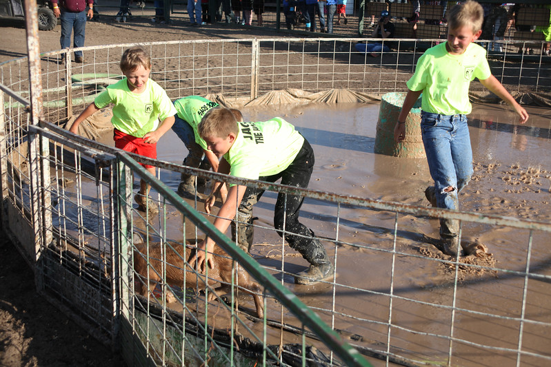 Havre Daily News / Floyd Brandt  Pig Wrestling at Blain County Fair Sunday team The Hog Boys