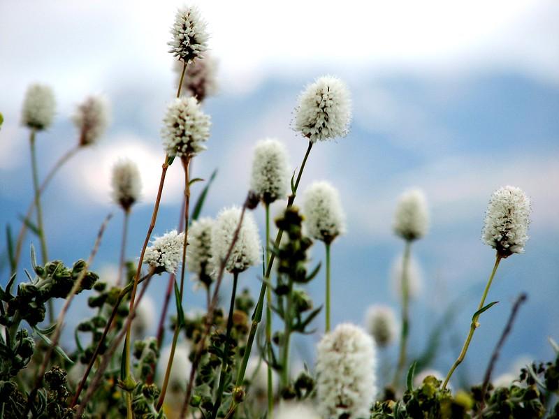 amh FLOWERS (1368).jpg