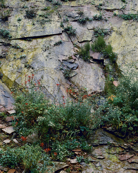Cliff With Flowers