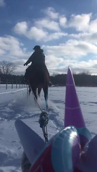 Sledding with Horses