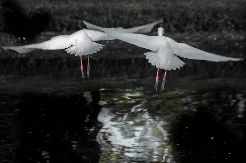 Florida Birds 14-03-18_2021.jpg