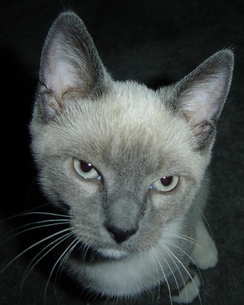 2007 06 22 - Cats 04.JPG