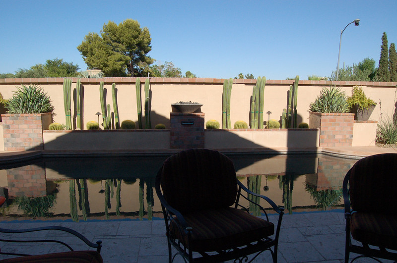 20120607_Scottsdale Back Yard_026.JPG