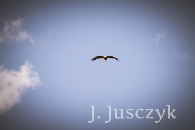 Jusczyk2021-6831.jpg