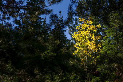 2012-09-14 Fall Color