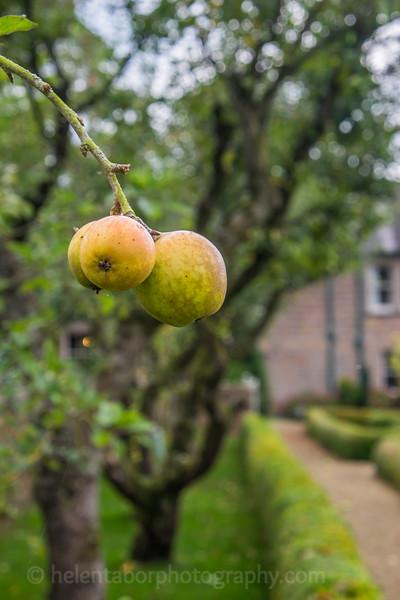 Hob Green autumn-12.jpg