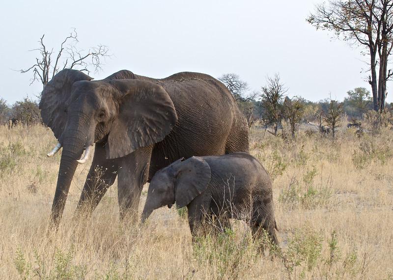 Elephant cow and calf, Kwondo Lagoon, Botswana