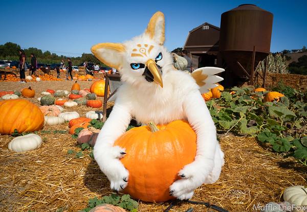 Pumpkin Patch Photoshoot