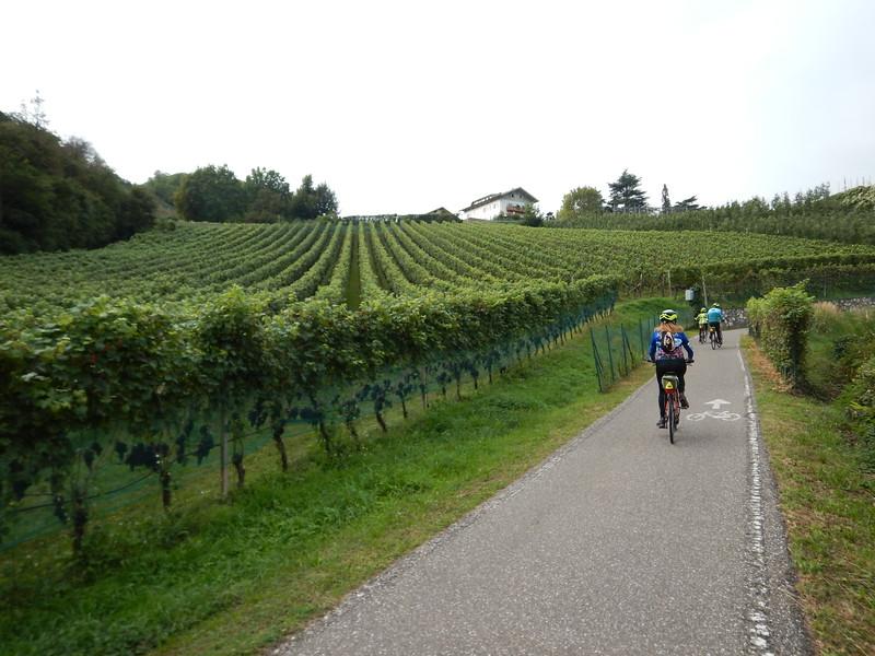 IVB-Cyling-along-vineyards-of-Kalterer-Valley.JPG