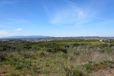 Orange groves, Silves, Algarve [Vivienne]
