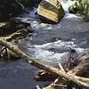 Joyce Kilmer Creek