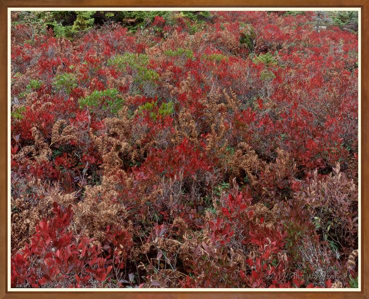 High-bush Blueberries & Fernsg