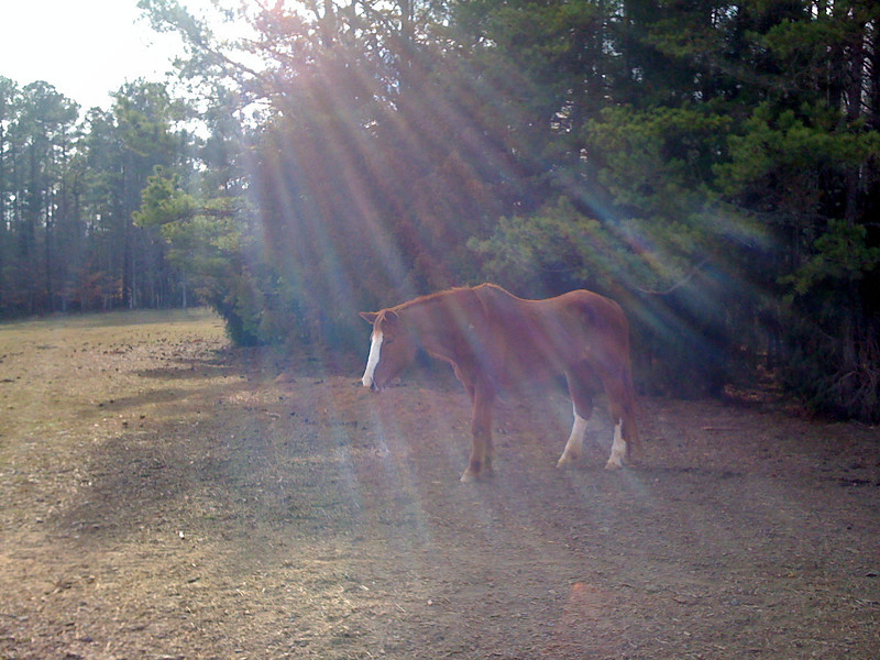 Let the Heaven's shine down on my Miss Bonnie.