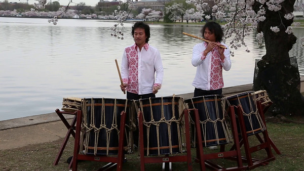 2014 Cherry Blossoms