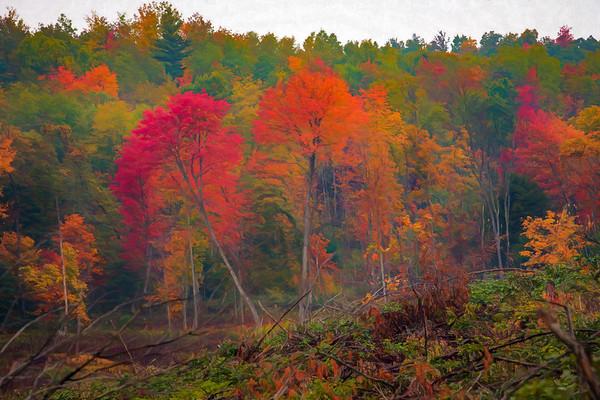 Photo Art - Landscape & Nature