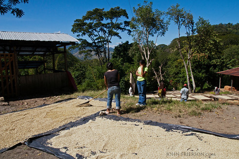 Coffee Drying Sheets in La Reyna, Nicaragua