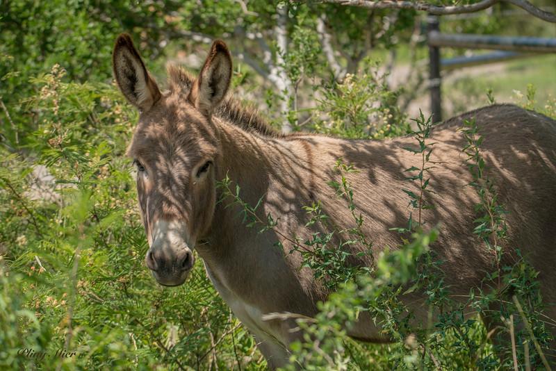 Donkey 2_DWL9606.jpg
