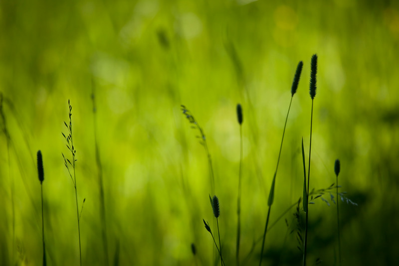 Dag_082_2012-jul-02_7882.jpg