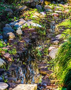 2021 01 07 Mercer Botanic Gardens