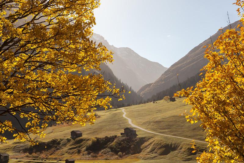 Herbst-im-Rheinwald-D-Aebli-017.jpg