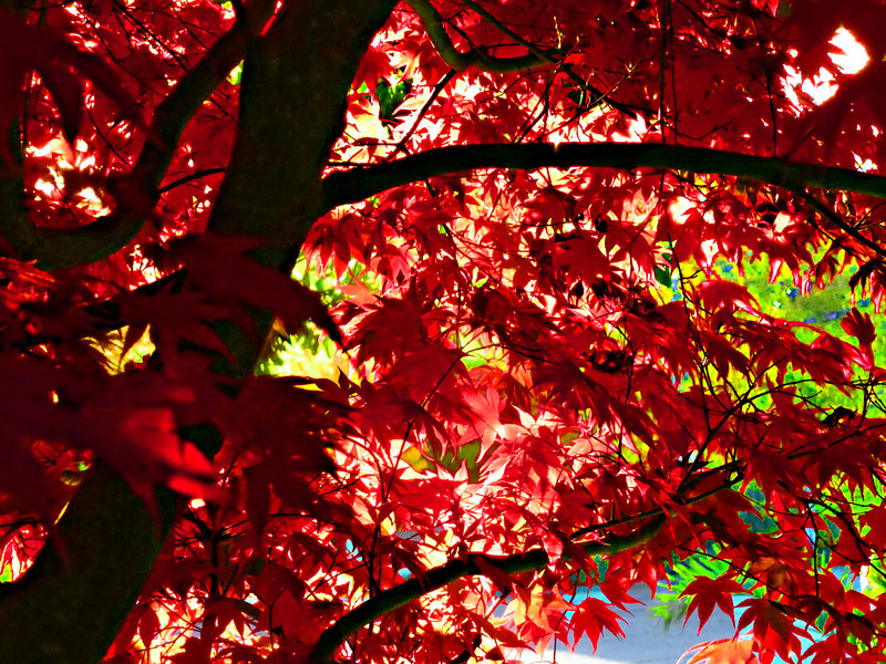 red leaves 0113.jpg