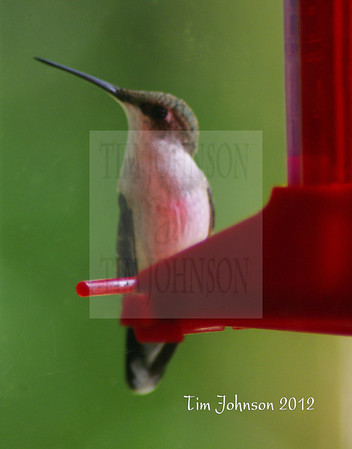 Hummers Celebrate The Summers