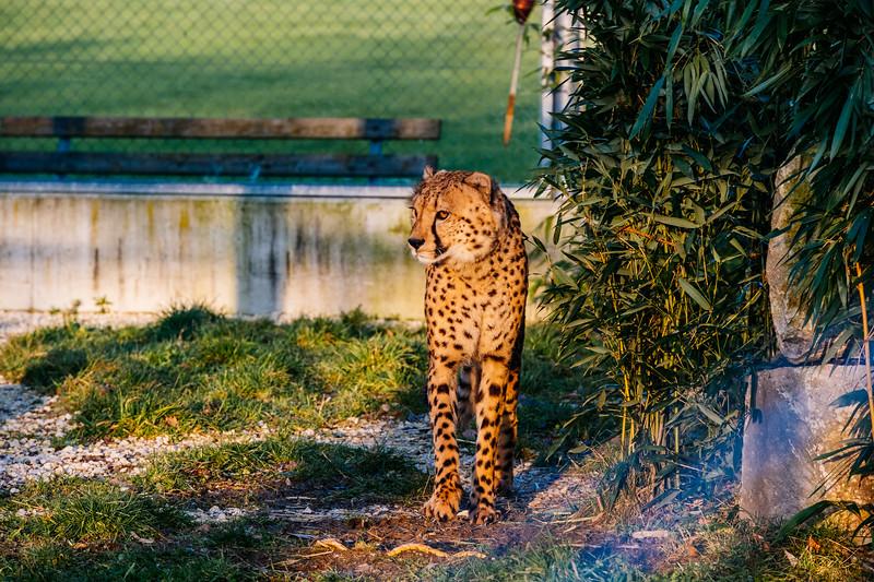 Tonis Zoo-0324.jpg