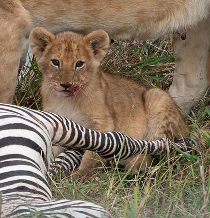 2019-08 Maasai Mara Lion Family