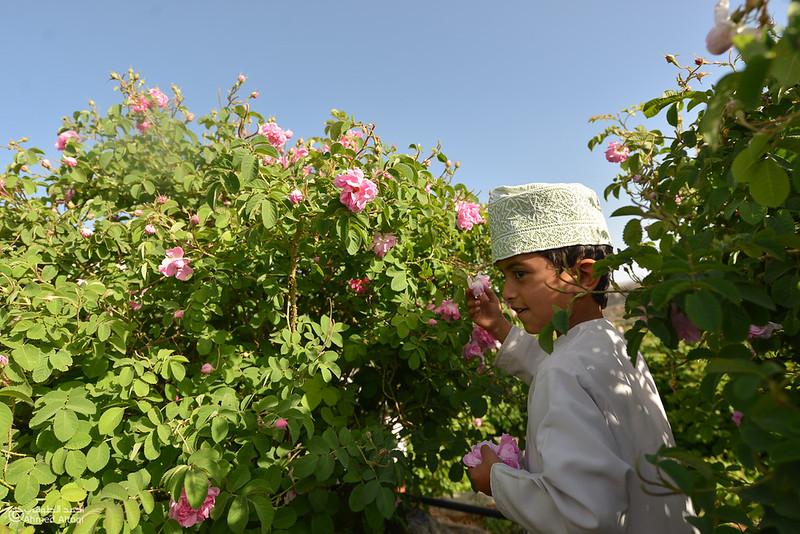 Roses Water (22)-Aljabal Alakhdhar-Oman.jpg