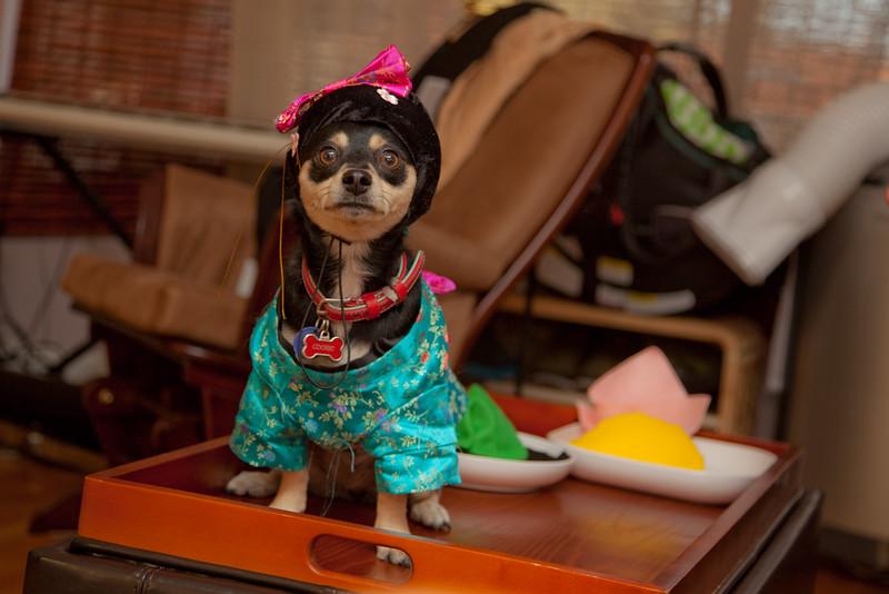 Dog-sushi-halloween-46.jpg